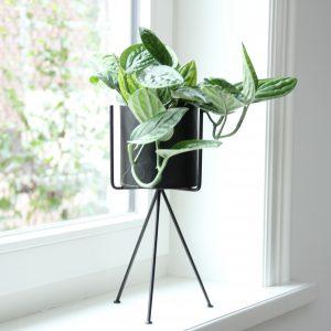 plantenstandaard madam stoltz