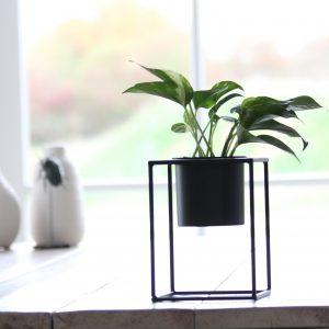 Plantenstandaard Xaf met epipremnum