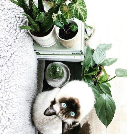 House…Plant… Ragdoll! Dit is Fleur!